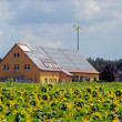 Stock Photo: Sunflower field and solar plant