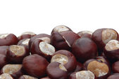 Lots of chestnuts — Stock Photo