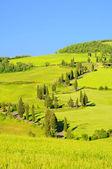 Cypress curve — Stock Photo