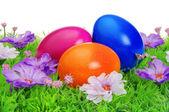 复活节彩蛋上花草甸 — 图库照片