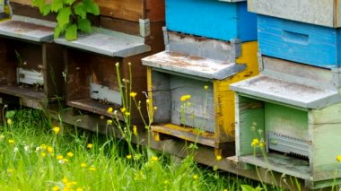 Bee hives — Stock Video