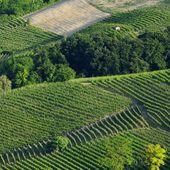 Langhe vineyards  — Stock Photo