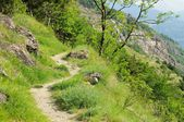 Aosta Valley hiking track  — Stock Photo