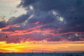 Sunset of summer — Stock Photo