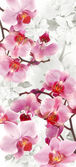 Flowering Orchids and Cherry decoration — Stock Photo