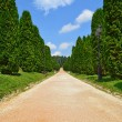 Cypress alley — Stock Photo