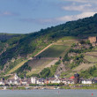 Rhine valley at the city of Kaub — Stock Photo