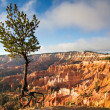 Jupiter Pine Tree at Bryce Canyon — Stock Photo
