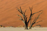 Petrified tree in front of an orange sand dune — Stock Photo