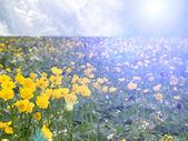Radura di fiore — Foto Stock