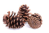 Three fir cones on a white — Stock Photo