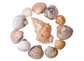 Close-up seashells on white — Stock Photo