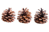 Three fir cones on a white — 图库照片