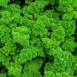Healthy curly parsley — Stock Photo