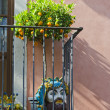 Taormina Balcony - Stock Photo