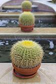 Tres cactus — Foto de Stock