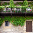 Ivy on the Facade — Stock Photo