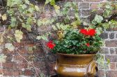 цветочный горшок — Стоковое фото