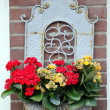 Volendam. Planter — Stock Photo