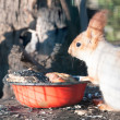 Squirrel — Stock Photo #20572775