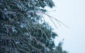 Lukier drzew — Zdjęcie stockowe