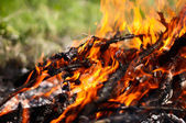 A log in the fire — Stock Photo