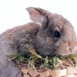 Stock Photo: White and grey baby rabbits in a basket isolated