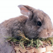 White and grey baby rabbits in a basket isolated — Stock Photo