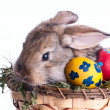 Art Little Easter bunny and Easter eggs on green grass — Stock Photo #28387405