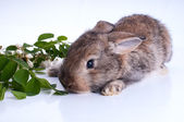 Illustrtion of a bunny sitting on a stump with green leaves on a white background — Photo
