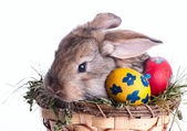 Art Little Easter bunny and Easter eggs on green grass — Stok fotoğraf