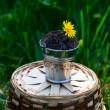 A small bucket with dandelions on a grass background — Stock Photo