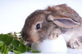 Illustrtion of a bunny sitting on a stump with green leaves on a white background — Стоковое фото