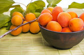 Apricots with green leaf isolated — Stock Photo