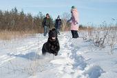 Black Labrador Retriever puppy — Stock Photo
