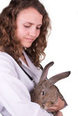 A female vet holding a rabbit — Foto Stock