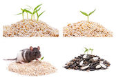With a big pile of seed plant grows,collection — Stock Photo