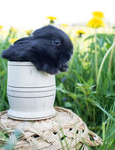 Black bunny sitting in a basket — Stock Photo
