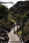 Small hiking trail — Stock Photo