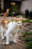 Exploring cat — Stock Photo