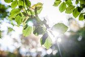 Sunlight through twigs — Stock Photo