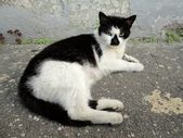 Black and white cat in wall — Stock Photo