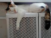 Cat sleeping on the battery — Stock Photo