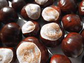 Chestnuts texture background — Stock Photo