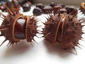 Chestnuts on a white background — Stock Photo