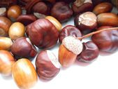 Acorns and chestnuts texture background — Stock Photo