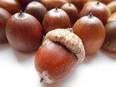 Texture background acorns — Stock Photo