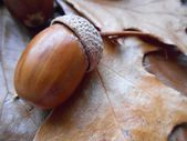 Acorn on brown leaf background — Stock Photo