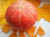 Pumpkin orange and yellow autumn foliage on the white background — Stock Photo