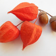 Orange cape gooseberries and acorns on a white background — Stock Photo